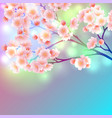 blossom branch of sakura flowers vibrant gradient vector image vector image