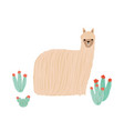 funny long-haired alpaca isolated on white vector image vector image