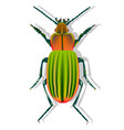 ground beetle with shadow on white background vector image