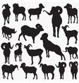 ram-animal silhouettes vector image