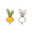 set colorful and monochrome turnip vector image vector image