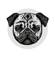 Graphically cute pug dog vector image