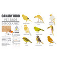 canary breeds icon set flat style isolated on vector image vector image