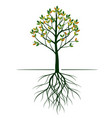 shape tree with leaves and roots vector image vector image