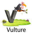 zoo animal alphabet v for vulture vector image