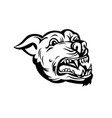 head of angry pit bull or pitbull barking retro vector image