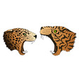hungry leopard and tiger want to eat vector image vector image