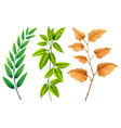 three types of leaves vector image vector image