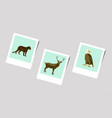 polaroid photo of puma deer eagle vector image