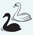 Swans on pond vector image vector image