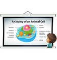 Chart showing anatomy of animal cell vector image vector image