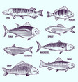 hand drawn fishes restaurant menu seafood salmon vector image vector image
