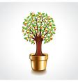 money tree in a pot vector image