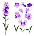 realistic detailed 3d lavender flowers set vector image vector image