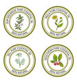 set of essential oil labels gum rockrose inula vector image vector image