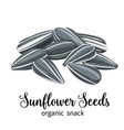 sunflower seeds vector image