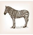 Zebra hand drawn sketch vector image