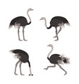cartoon ostrich bird set vector image vector image