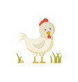 domestic bird white hen crest poster vector image