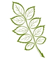 leaf of dog rose vector vector image vector image