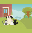 cute dog cats rabbit backyard house pet care vector image