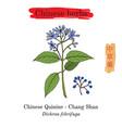 medicinal herbs of china chinese quinine vector image vector image