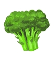 picture broccoli vector image vector image