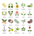 set herbs and plants color flat icons used in vector image