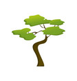 african isolated jungle tree plant