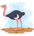cartoon ostrich in field vector image vector image