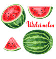 set watermelons and slices vector image