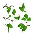 twigs lilac with leaves on a white background vector image
