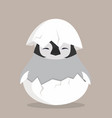 baby penguin hatched in egg vector image vector image