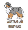 cute cartoon australian shepherd dog breed