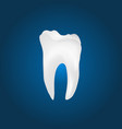 dental molar tooth vector image