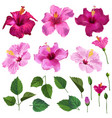 hibiscus floral set flowers leaves and branches vector image