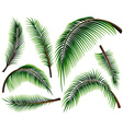 Different sizes of palm leaves vector image vector image