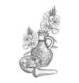 drawing evening primrose oil vector image
