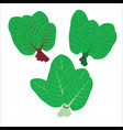 flat icons leafy green vegetable vector image