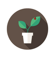 Pot with Leaves and Lady Bug flat icon vector image vector image