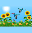 two hummingbirds flying in sunflower field vector image vector image