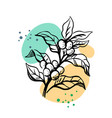 branch coffee with leaves vector image vector image