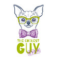 cute chihuahua dog t-shirt print design cool vector image
