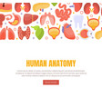human anatomy landing page template with internal vector image vector image