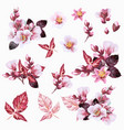 collection realistic cherry pink flowers vector image