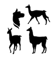 silhouettes of a lama vector image vector image