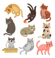 cat set collection vector image