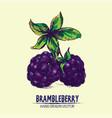 digital detailed brambleberry