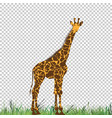 giraffe head animal for t-shirt vector image vector image