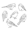 hand drawn birds line art set cute animals vector image